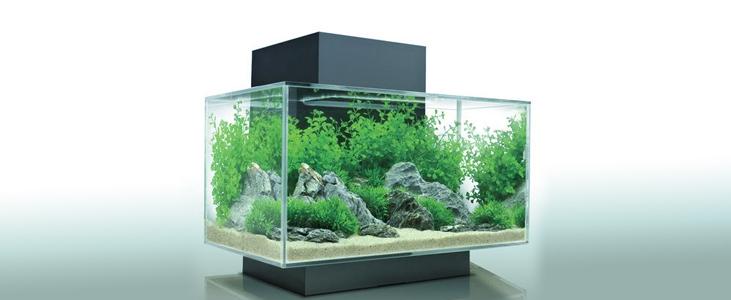 Acrylic Aquarium - Pleasant Plastic